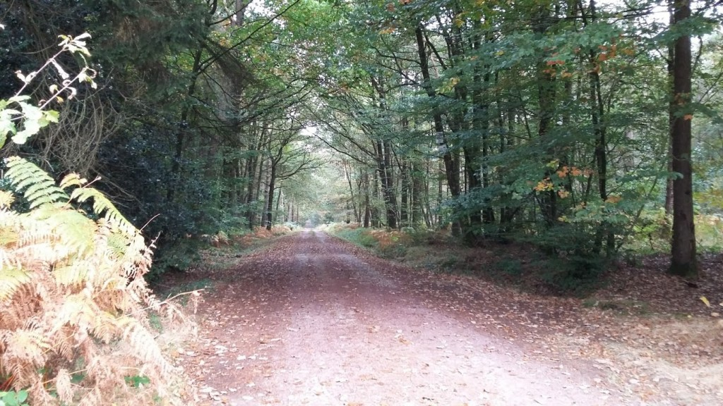 foret-de-broceliande